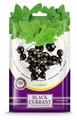Greenfield Ароматизатор Black Currant, 15 гр