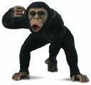 Collecta Самец Шимпанзе 88492