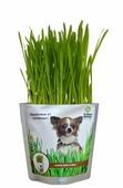 Лакомство для собак Happy Plant Трава Набор для выращивания