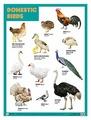 Плакат Мозаика-Синтез DOMESTIC BIRDS (Домашние птицы)