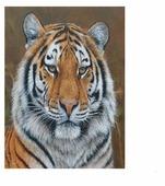 "Molly Картина по номерам ""Амурский тигр"" 15х20 см (KH0250)"