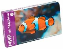 Набор карточек Умница Мир на ладошке. Чудо-рыбы 18x10.3 см 24 шт.
