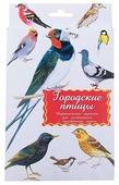 Набор карточек Маленький гений Городские птицы 21x15 см 16 шт.