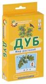 Набор карточек Айрис-Пресс Занимательные карточки. Дуб. Мир растений 14x8 см 48 шт.