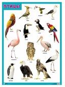 Плакат Мозаика-Синтез Птицы