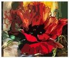 """Color Kit Картина по номерам """"Красный мак"""" 40х40 см (CF004)"""
