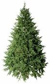 Green Trees Ель Берген Люкс