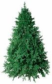 Green Trees Ель Монтерей Люкс