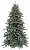Triumph Tree Сосна Ноттингемская