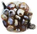 Грунт Шурум-бурум стеклянный ракушка, 0.34 кг