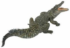 Фигурка Papo Нильский крокодил 50055
