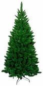 Triumph Tree Ель Триумф Норд стройная