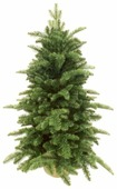 Triumph Tree Ель Нормандия в мешочке зеленая 0.6
