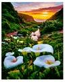 """ВанГогВоМне Картина по номерам """"Долина диких калл"""", 40х50 см (ZX 21012)"""