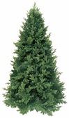 Triumph Tree Ель Царская зеленая 2.3