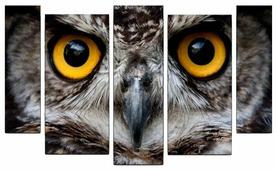Модульная картина Картиномания Взгляд совы