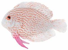 Фигурка для аквариума Jelly-fish Рыба Клоун маленькая 9.7х2.5х14 см