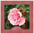 Алмазная живопись Набор алмазной вышивки Роза у воды (АЖ-1704) 25х25 см