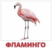Набор карточек Агабум Птицы 20 шт.