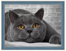 Алмазная живопись Набор алмазной вышивки Британский кот (АЖ-1463) 40х30 см