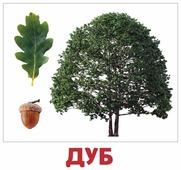 Набор карточек Агабум Деревья 20 шт.
