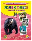 Набор карточек Проф-Пресс Обучающие карточки. Животные Южной Америки 22x17 см 16 шт.