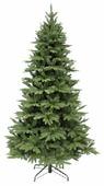 Triumph Tree Ель Гималайская темно-зеленая