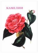 Набор открыток Белый город Камелии, 15 шт.