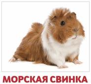 Набор карточек Агабум Домашние животные 20 шт.