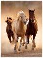 Пазл Clementoni High Quality Collection Бегущие кони (39168), 1000 дет.