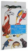Набор карточек Маленький гений Животные Южной Америки 21x15 см 16 шт.