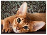 Алмазная живопись Набор алмазной вышивки Абиссинская кошка (АЖ-1458) 40х30 см