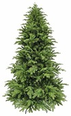 Triumph Tree Ель Королевская