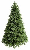 Green Trees Ель Грацио Премиум